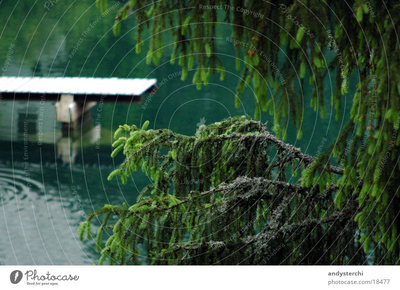 Water Tree Cold Lake Branch Fir tree Footbridge Pond Untersee