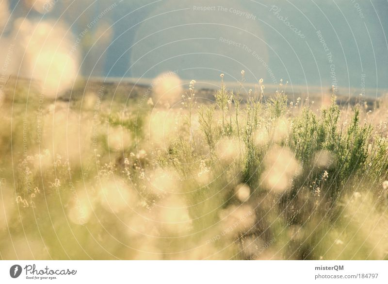 Nature Summer Life Meadow Emotions Sadness Warmth Landscape Contentment Field Moody Sunset Back-light Background picture Structures and shapes Light