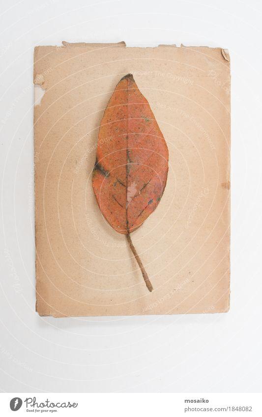 Nature Old Plant Leaf Natural Art Orange Design Copy Space Retro Creativity Uniqueness Education Dry Science & Research Exotic
