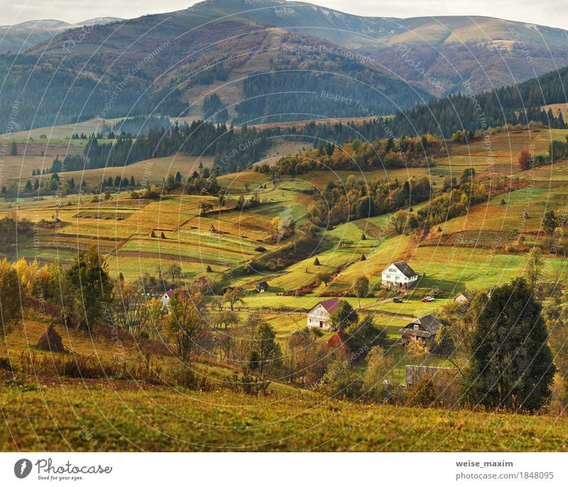 Autumn garden in Carpathian mountains. Orchard on the fall hills Nature Vacation & Travel Plant Green Tree Landscape House (Residential Structure)