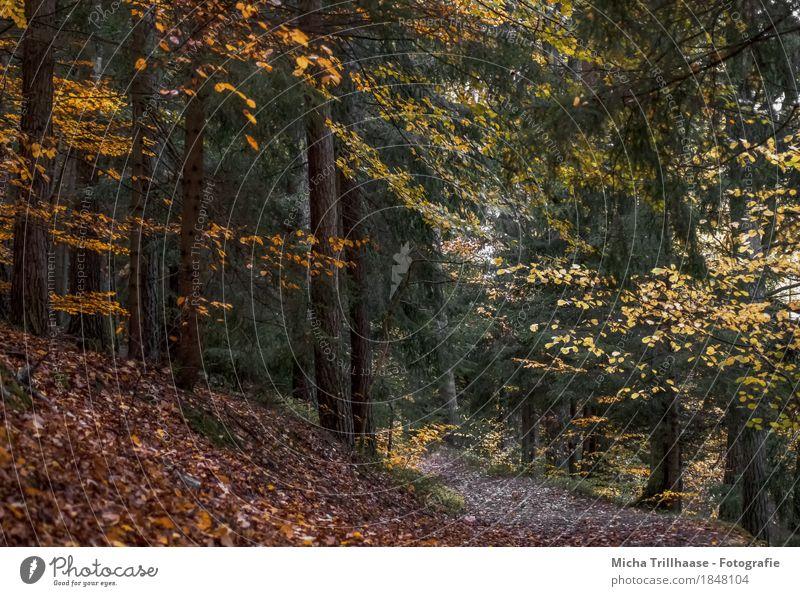 Nature Plant Green Tree Landscape Red Relaxation Loneliness Leaf Calm Forest Environment Yellow Life Autumn Natural