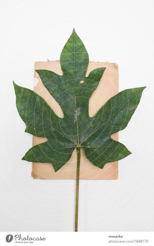 Nature Plant Green Leaf Art Exceptional Brown Design Copy Space Elegant Retro Esthetic Authentic Creativity Uniqueness Education