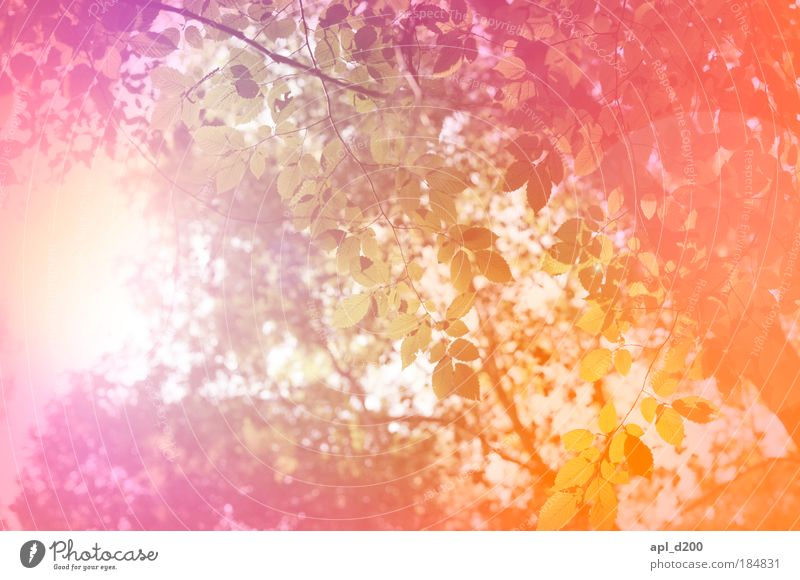 paint forest Colour photo Multicoloured Exterior shot Experimental Abstract Deserted Day Light Light (Natural Phenomenon) Sunlight Back-light