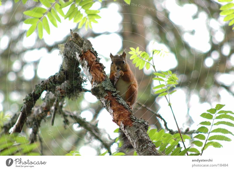 Tree Animal Forest Transport Branch Rodent