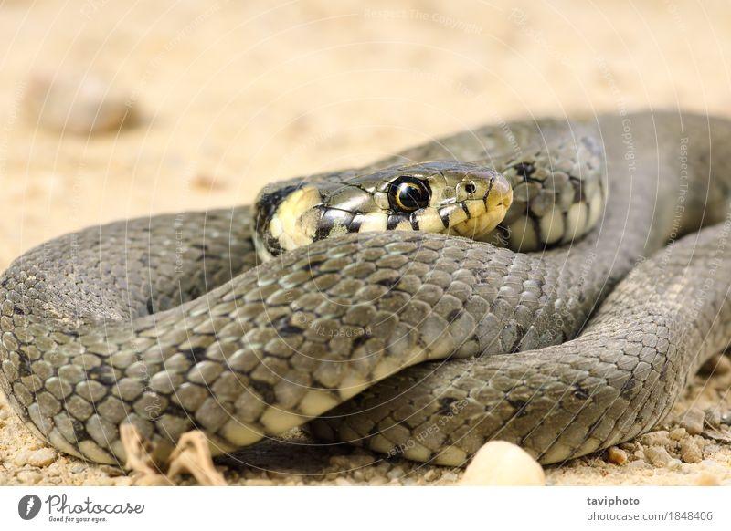 detail of grass snake Nature Animal Black Face Grass Wild Living thing European Reptiles Snake Hunter Carnivore