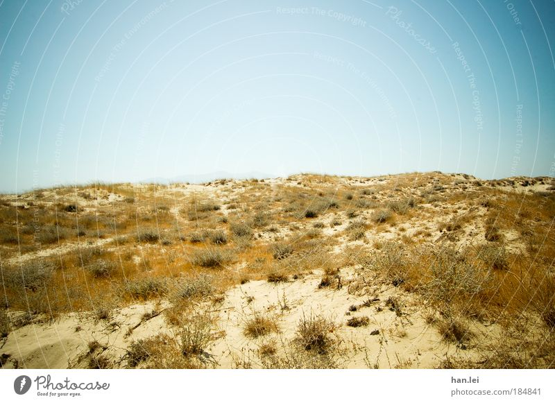 dune Colour photo Exterior shot Deserted Copy Space top Copy Space bottom Day Central perspective Nature Plant Earth Sky Cloudless sky Summer Beautiful weather