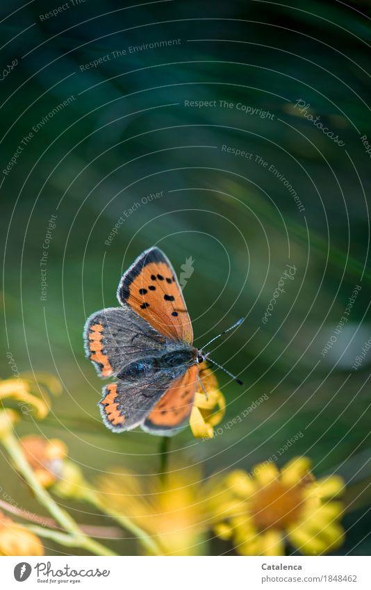Nature Plant Summer Beautiful Green Flower Animal Black Environment Yellow Meadow Brown Flying Moody Orange Esthetic
