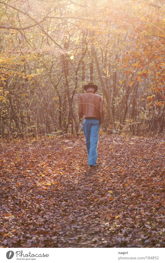 autumn cliché Colour photo Exterior shot Sunrise Sunset Long shot Masculine Man Adults 1 Human being Autumn Forest Hat Think Going Walking Large Warmth Brown