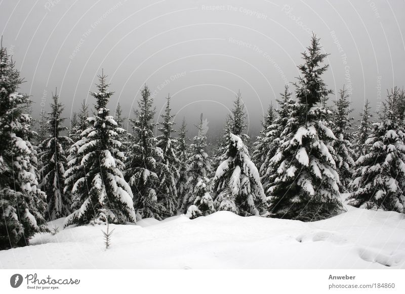 Nature Beautiful White Tree Winter Forest Cold Snow Emotions Mountain Gray Sadness Landscape Ice Bright Moody