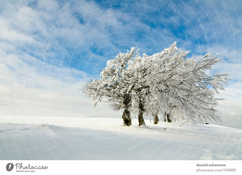 Nature White Tree Blue Winter Vacation & Travel Loneliness Far-off places Snow Mountain Ice Wind Weather Seasons Elegant Frost