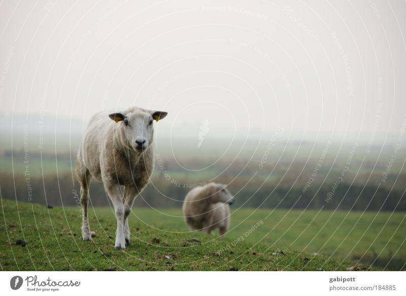 Sky Nature Ocean Landscape Animal Meadow Autumn Field Fog Wait Stand Observe Herdsman Hill Pasture Pet