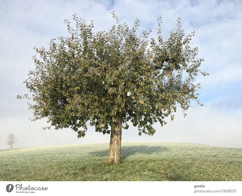 Nature Plant Blue Sun Tree Landscape Loneliness Autumn Natural Healthy Gray Fruit Field Fog Hiking Infancy