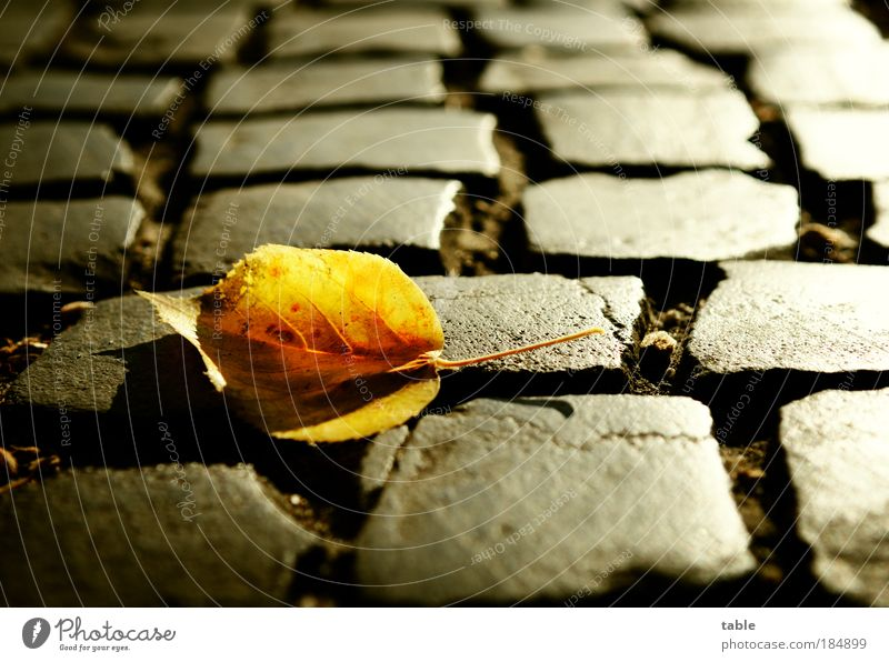 Nature Old Plant Leaf Black Loneliness Yellow Street Emotions Contrast Gray Stone Sadness Lanes & trails Glittering Environment