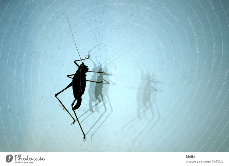 Blue Animal Window Dirty Glass Sit In pairs Insect Disgust Window pane Dust Crouch Locust Dusty House cricket