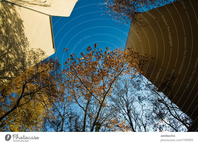 worm's-eye view Leaf Gold Autumn Seasons Autumn leaves October Backyard House (Residential Structure) Building Wall (barrier) Fire wall Tenant Landlord Sky