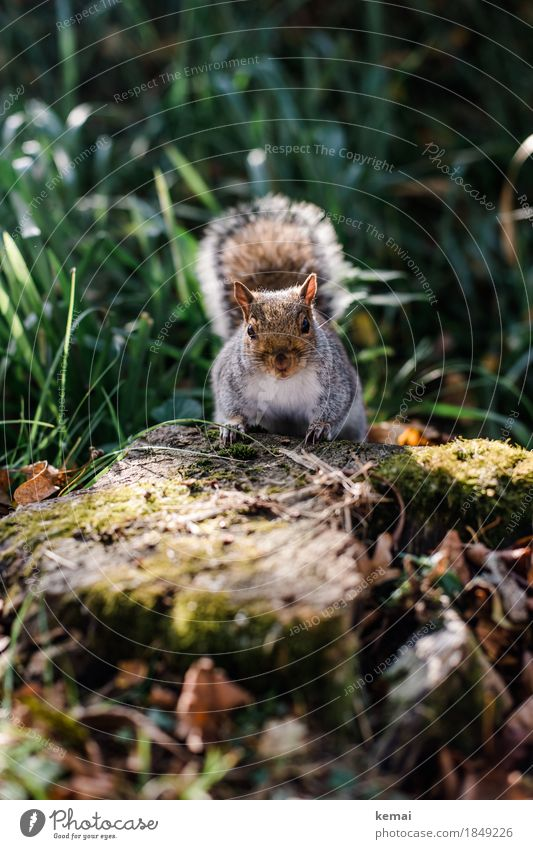 hello. Environment Nature Plant Animal Spring Beautiful weather Grass Tree stump Park Forest Wild animal Animal face Pelt Squirrel Tails 1 To hold on Looking