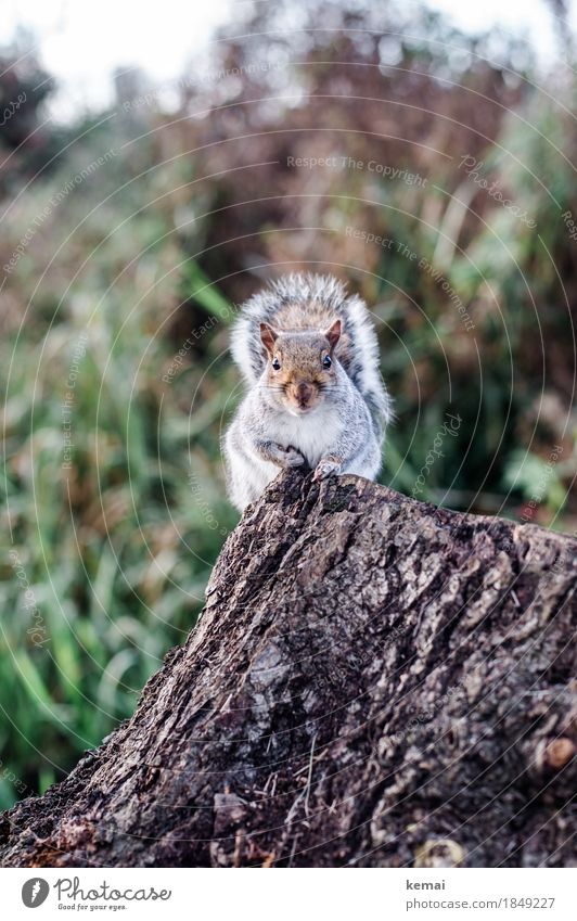 My name is Squirrel, Cyrill the Squirrel. Environment Nature Animal Autumn Tree Tree stump Tree bark Park Wild animal Animal face Pelt Paw 1 To hold on Looking