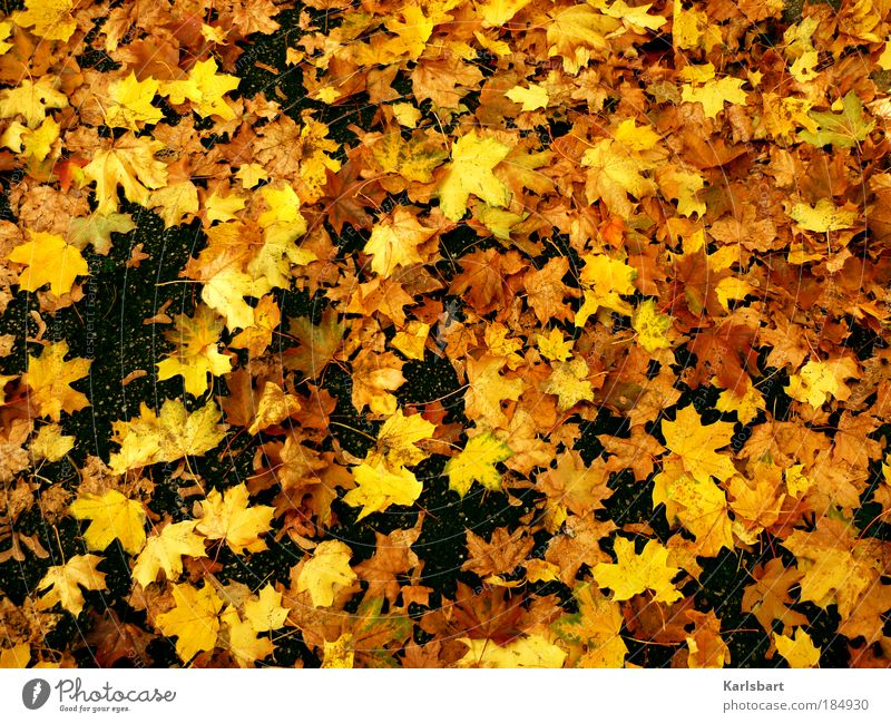 Nature Tree Colour Leaf Yellow Street Life Autumn Lanes & trails Freedom Park Power Gold Lie Places Design
