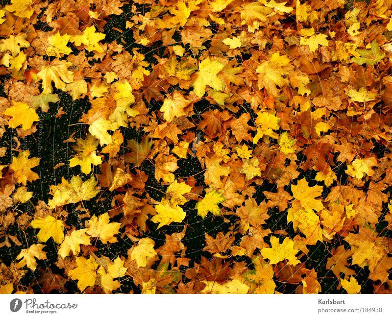 Nature Tree Colour Leaf Yellow Street Life Autumn Lanes & trails Freedom Park Power Gold Lie Places Design