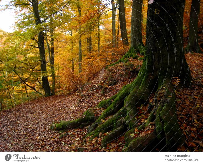 Nature Tree Forest Autumn Lanes & trails Landscape Moody Earth Moss Beautiful weather Thuringia Thueringer Wald