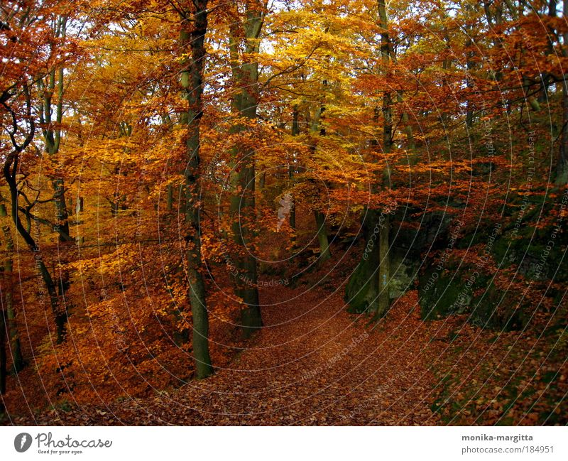 Nature Tree Calm Forest Autumn Lanes & trails Landscape Contentment Rock Beautiful weather Safety (feeling of)