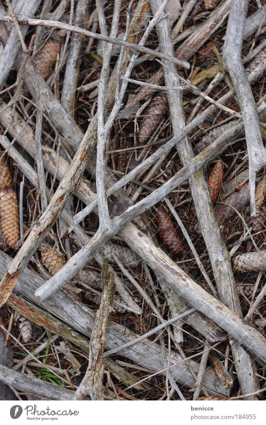 Pride in wood Wood Branch Firewood Woodground Cone Background picture Tree Ground