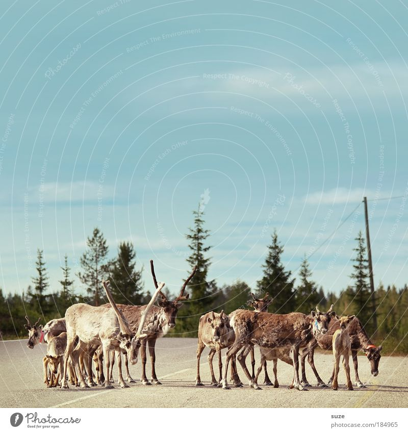 Sky Nature Plant Tree Animal Forest Environment Street Transport Wild animal Wait Stand Trip Group of animals Safety Curiosity