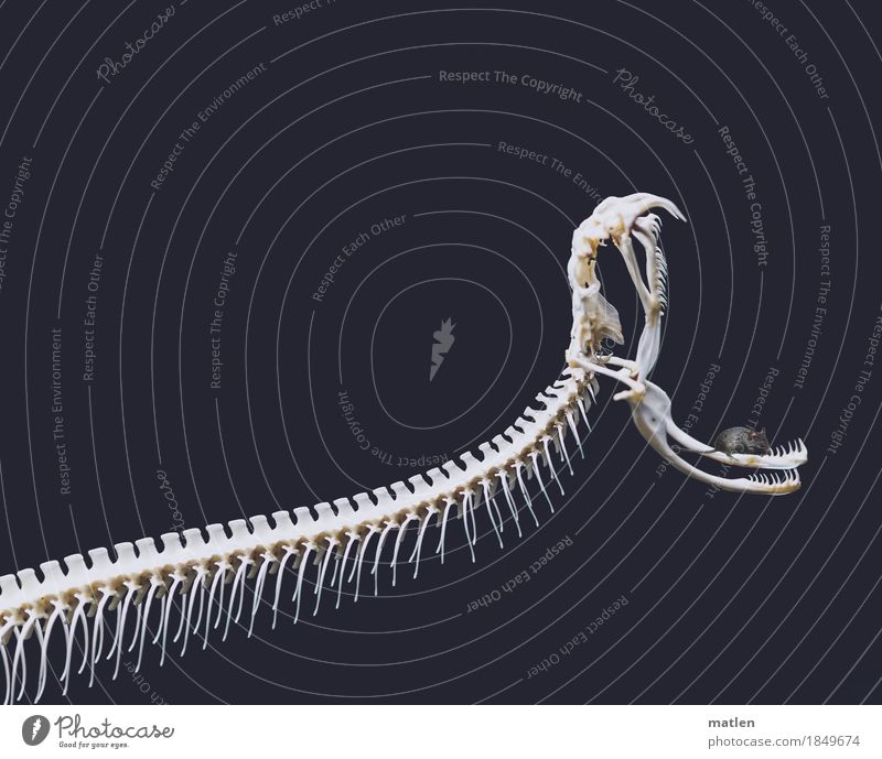 White Animal Gray Contentment Wild animal Creepy Pet Mouse Muzzle Snake Skeleton