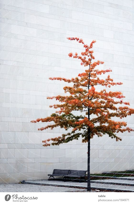 Tree Loneliness Cold Wall (building) Architecture Sadness Emotions Autumn Wall (barrier) Wood Gray Stone Brown Sand Facade Metal