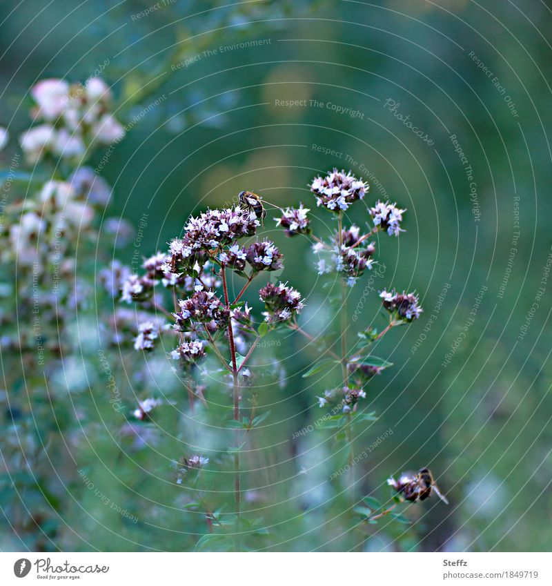 it used to be summer Environment Nature Plant Summer Bushes Garden plants Bee Insect Blossoming Fragrance Beautiful Green Summer feeling Moody Blur Dark green