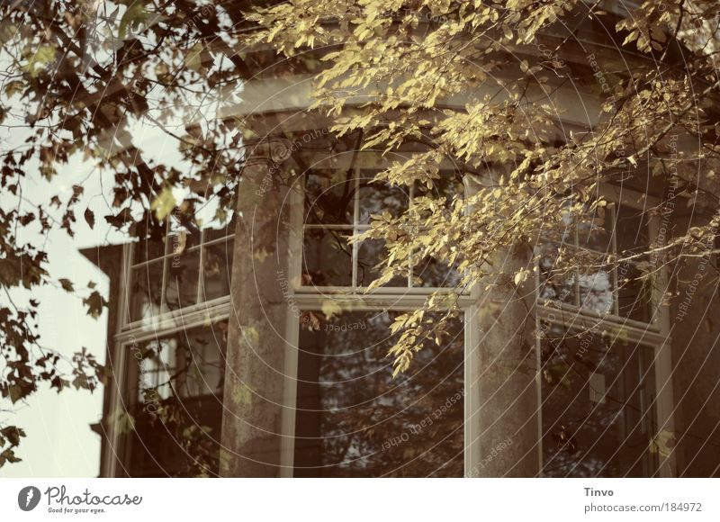 Old House (Residential Structure) Autumn Window Building Architecture Castle Derelict Manmade structures Ruin Transparent False Double exposure Twigs and branches Grand Oriel