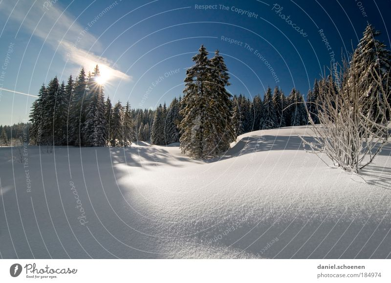 Nature Blue White Tree Vacation & Travel Winter Calm Forest Landscape Snow Freedom Horizon Ice Climate Tourism Sunset