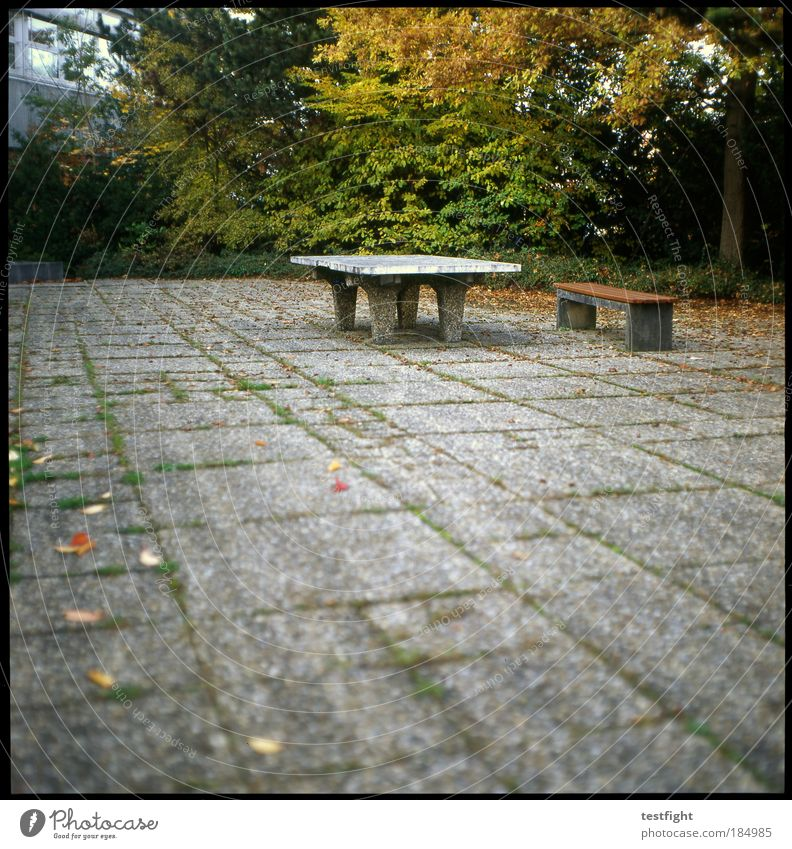 marginalized sport Leisure and hobbies Playing School School building Schoolyard Terrace Loneliness Forget Old Solid Bench Table tennis table Autumn Leaf Tree