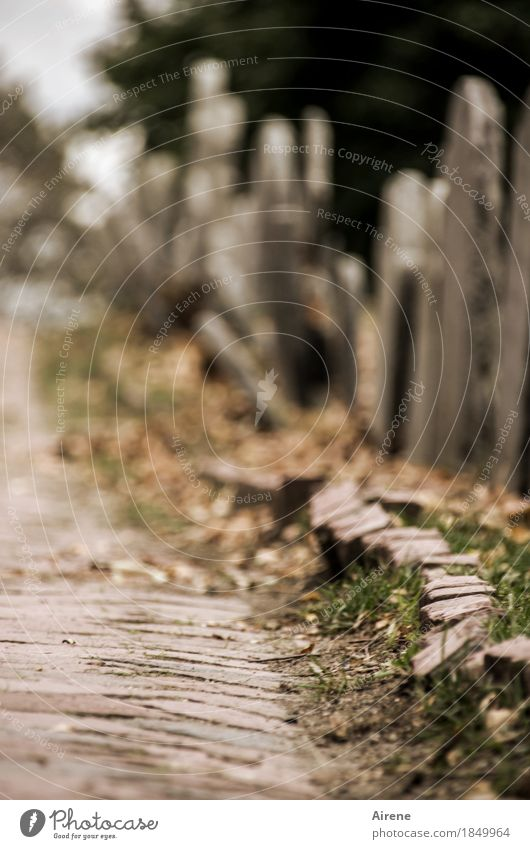 Nature goes its eternal course Autumn Cemetery Lanes & trails Tombstone Paving stone Cobblestones Stone Dark Creepy Historic Gloomy Brown Gray Hope Belief