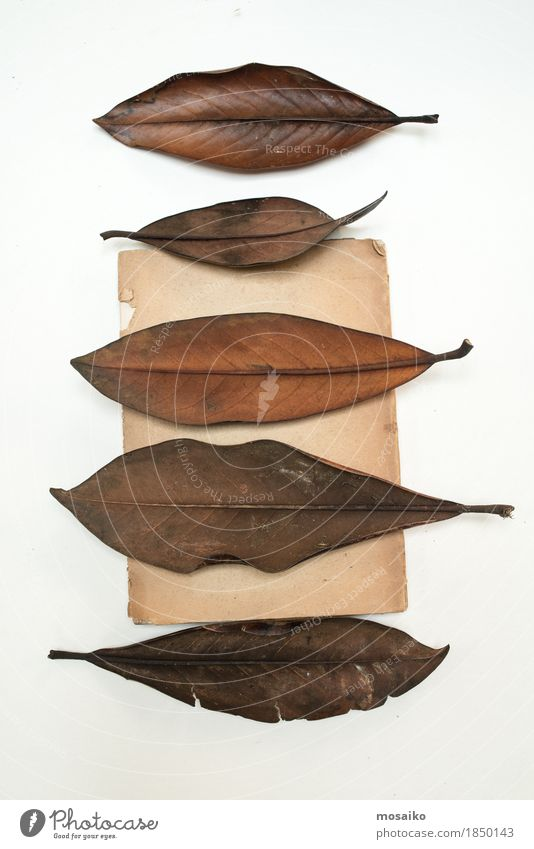 Nature Old Plant Leaf Art Brown Design Together Copy Space Retro Esthetic Creativity Uniqueness Education Science & Research Exotic