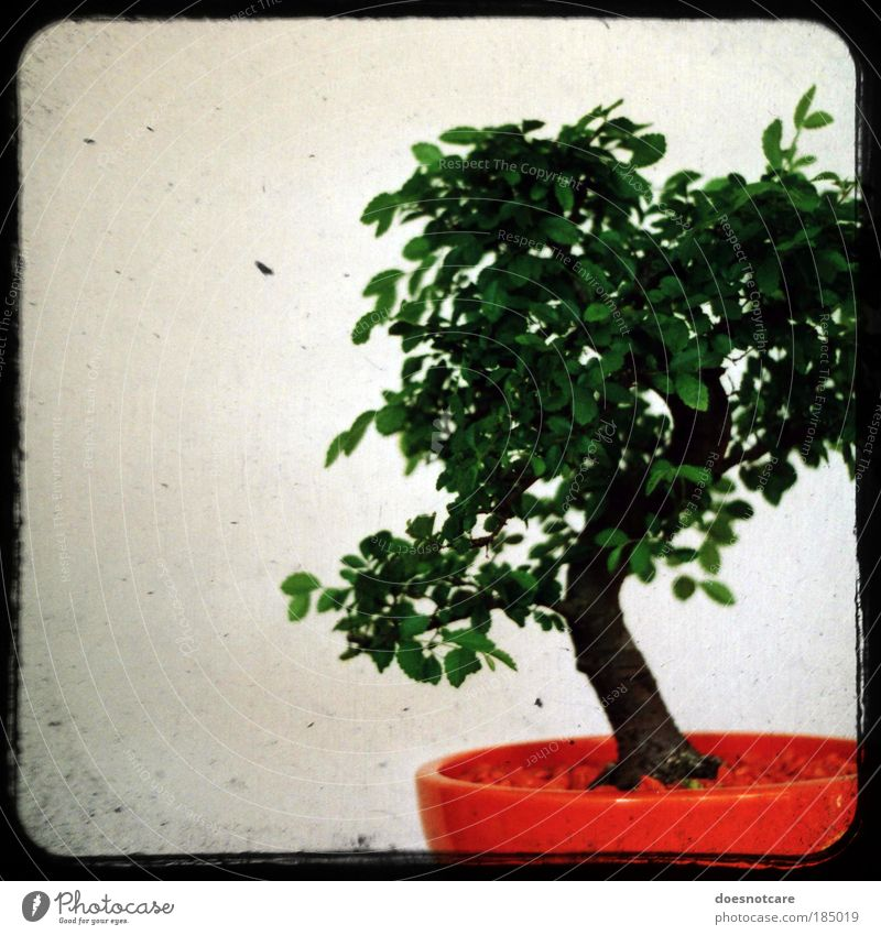 Penzai. Tree Green Plant Orange Small Analog Pot plant China Japan Frame Miniature Houseplant Asia Bonsar Camera tossing Garden art