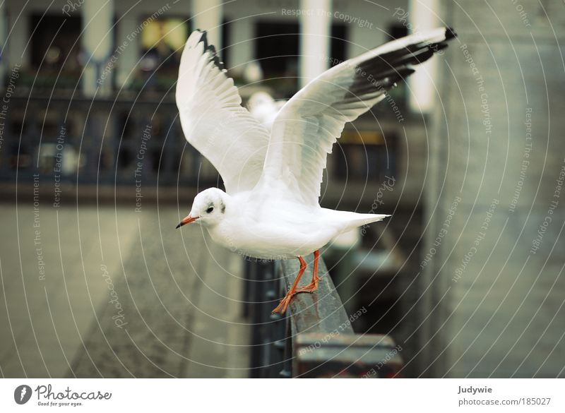 Let's go Environment Nature Air Winter Wind Places Building Animal Bird Seagull 1 Flying Esthetic Beautiful White Passion Energy Freedom Cold Innocent