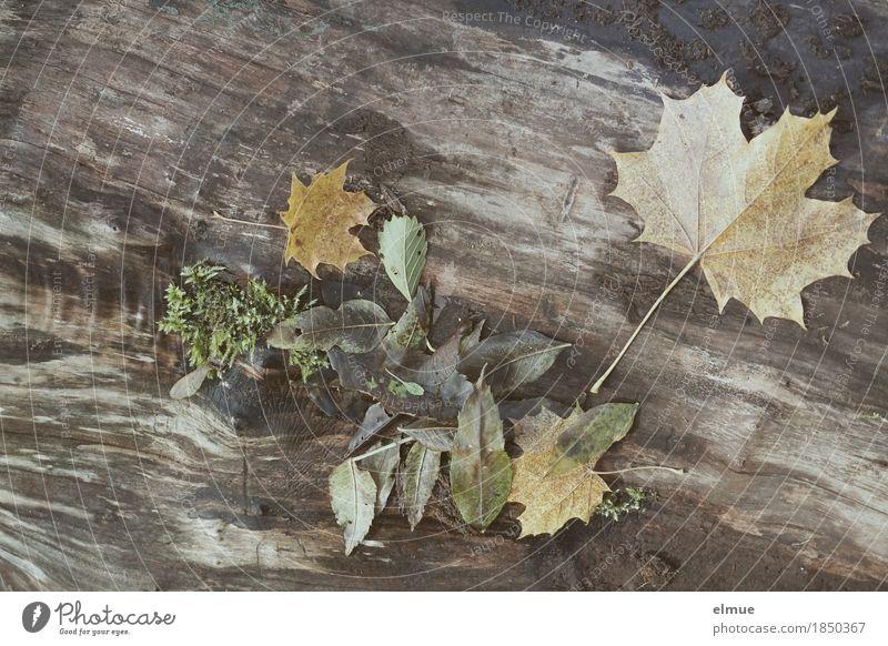 autumn Environment Nature Autumn Tree Leaf Tree trunk Maple leaf Park Blues Lie Dark Gloomy Romance Sadness Pain Longing Senior citizen Design Loneliness
