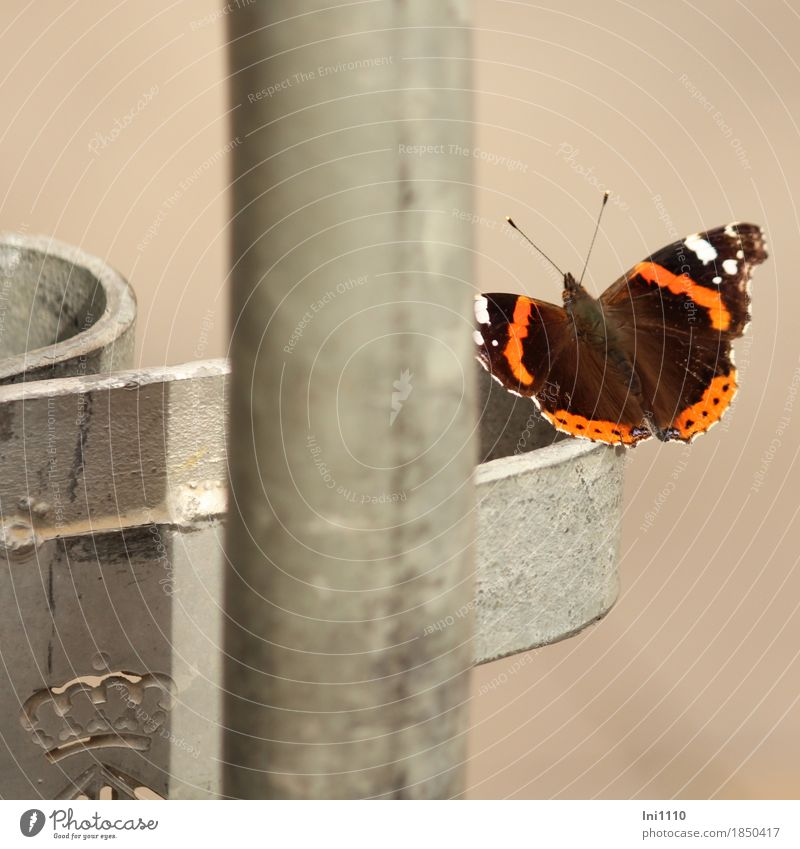 admiral City trip Sunlight Autumn Beautiful weather Road traffic Lanes & trails Wild animal Butterfly Red admiral 1 Animal Metal Discover Cold Natural Brown