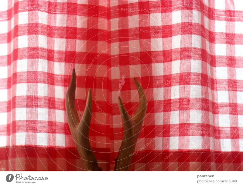 antlered Style Design Leisure and hobbies Hunting Arrange Interior design Decoration Room Curtain Drape Checkered Cloth Reddish white Antlers Deer Death Animal