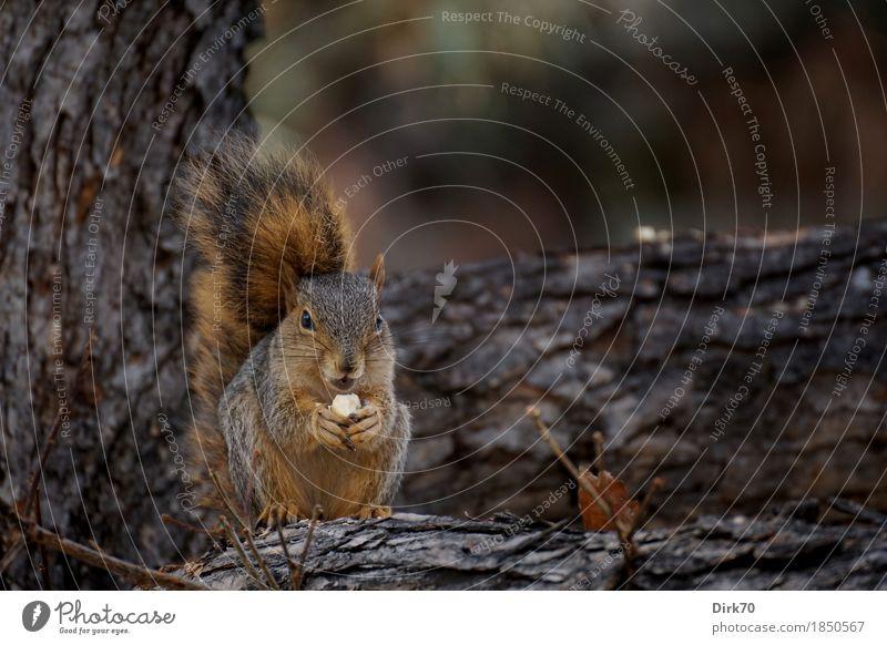 Nature Tree Animal Dark Forest Cold Autumn Small Park Free Wild animal USA To enjoy Branch Observe Cute