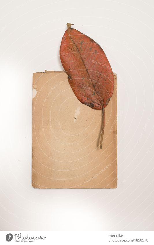 Nature Old Plant Leaf Art Exceptional Design Copy Space Elegant Retro Esthetic Authentic Creativity Simple Education Science & Research