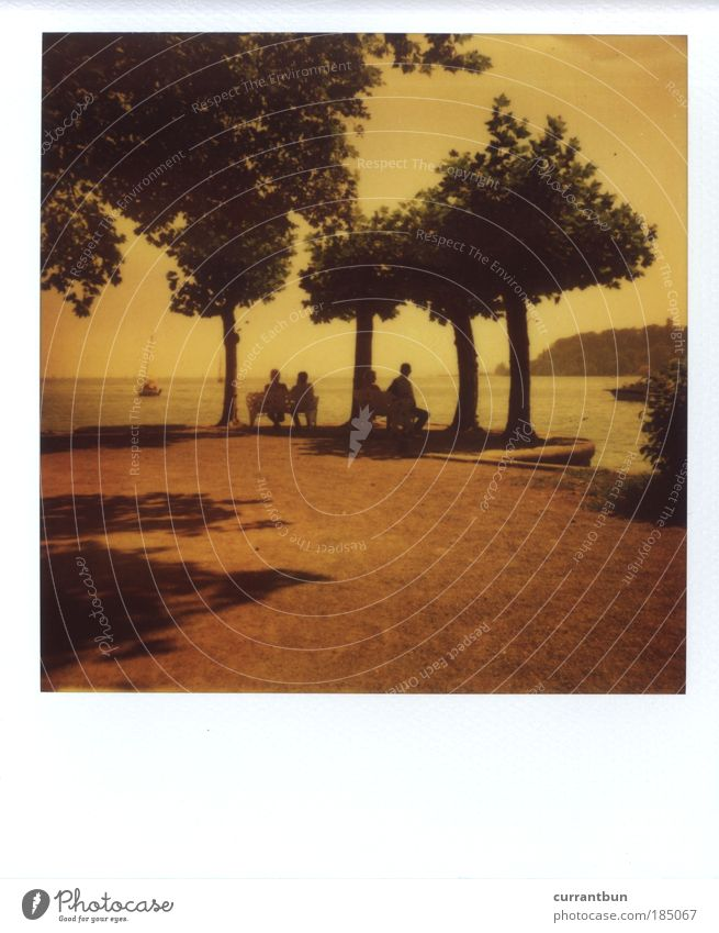 Human being Nature Water Tree Lake Moody Art Sit Bench Polaroid Idyll Lakeside Stagnating Lake Constance Mainau island