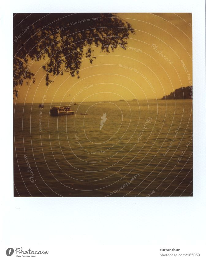 "xoxoxo Water Kitsch Lake Constance Konstanz boat ""row row your boat"" ""tree ""who hangs in the picture"" Tree Yellow Black Polaroid Authentic sx-70 Colour photo"