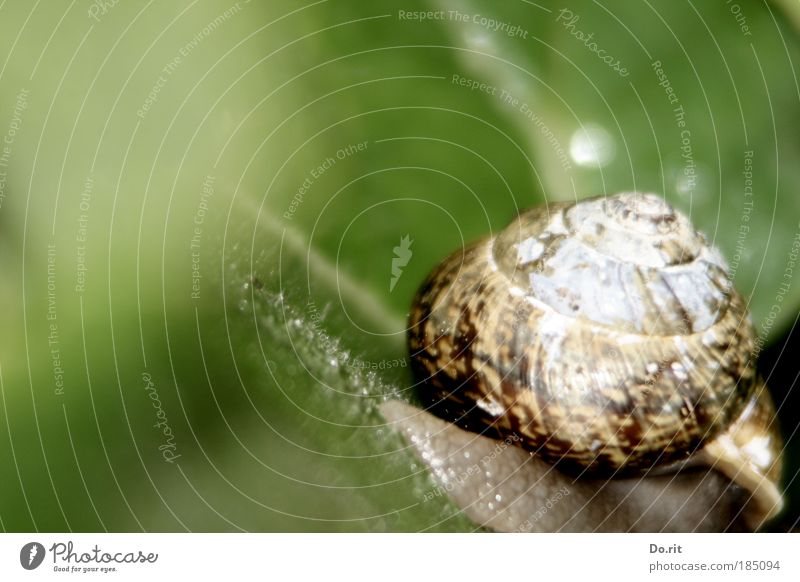 You can do it, Judith! Nature Traffic infrastructure Snail Build Movement Living or residing Serene Speed Idyll Break Calm Contentment Trail of mucus