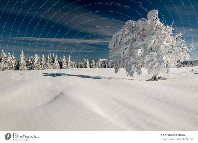 Sky Nature Blue White Tree Vacation & Travel Winter Forest Far-off places Landscape Cold Snow Freedom Bright Horizon Tourism