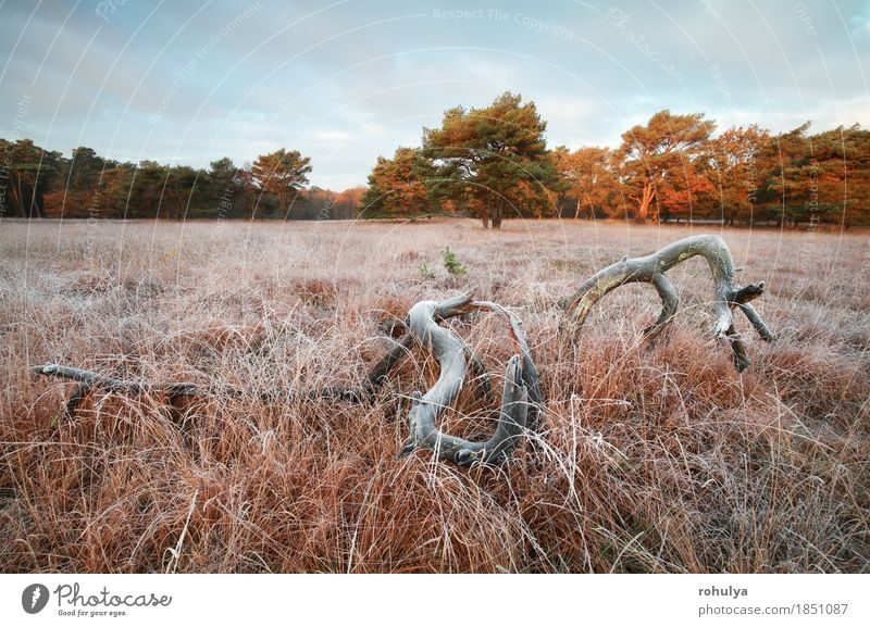 old tree on frosted meadow in autumn sunrise Winter Nature Landscape Sky Autumn Tree Grass Meadow Forest Old Wild White Death wood field Grassland Frost ice