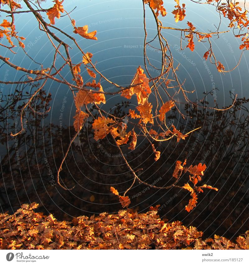 Sky Nature Plant Blue Water Tree Leaf Environment Autumn Lake Weather Idyll Climate Transience Beautiful weather Elements