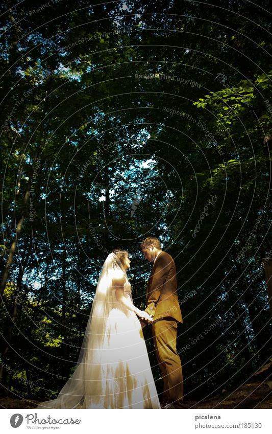 Human being Youth (Young adults) Forest Emotions Couple Together Adults Safety Romance Trust Relationship Safety (feeling of) Attachment Loyalty Vail Wedding dress