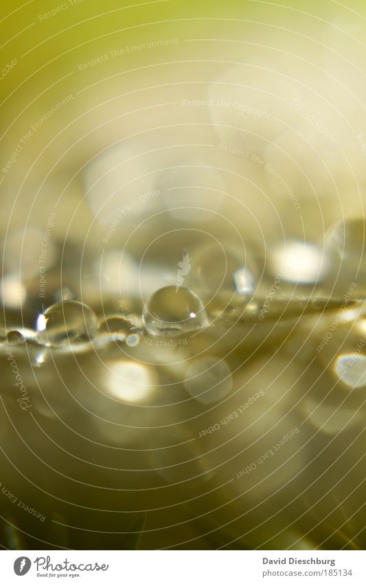 royal pallor Nature Water Drops of water Rain Plant Leaf Wet Natural Green Silver Glittering Sphere Round Blur Dew Colour photo Exterior shot Close-up Detail